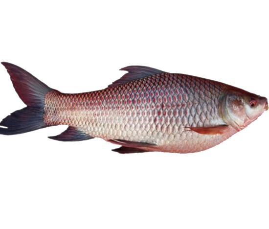 Top 7 foods to control cholesterol with diet weightloss for Is fish high in cholesterol